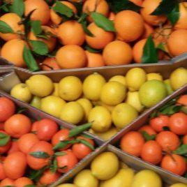 Pacco misto 1: Tarocco Gallo, Limoni confezione 30 Kg-Spedizione lunedì e martedì